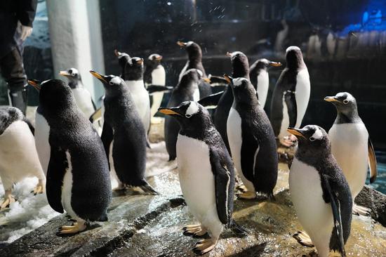 疫情下的新希望:浩海立方连续两年成功孵化极地企鹅