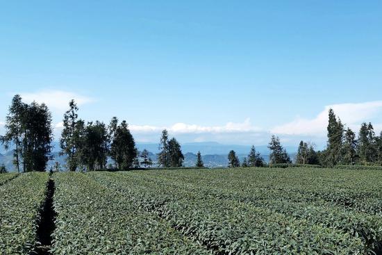 雨城1.5万亩的高标准农田复工啦!