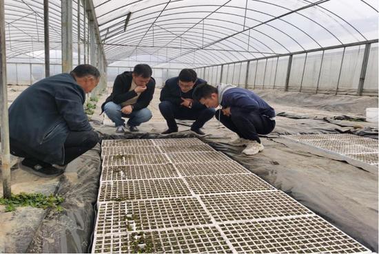 浙江中烟到德昌调研2021年烟叶生产情况