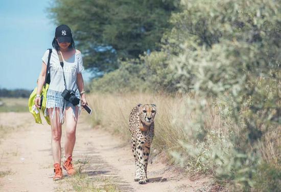 杨雪梅在纳米比亚与猎豹同行。