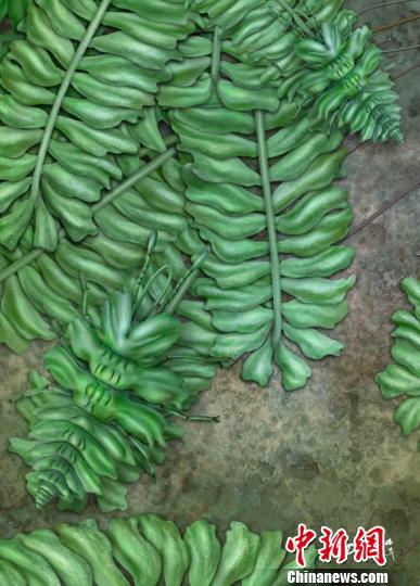 黄氏拟苔草蛉的生态复原图。 南古所 杨定华 摄