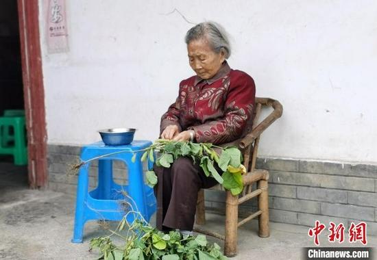 杨学彬老人正在剥青豆。 赵会 摄