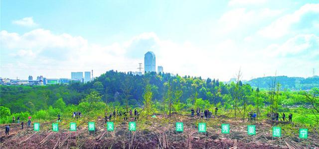 今年遂宁市将完成营造林12万亩