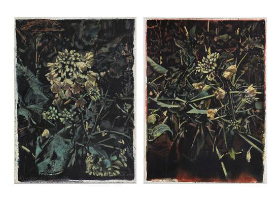 马文婷,植物,纸上综合材料,38×28cm×2,2016