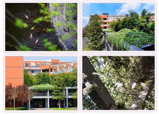 笑意点亮四月 共迎一树花开丨四川师大附中高三学子开课啦!