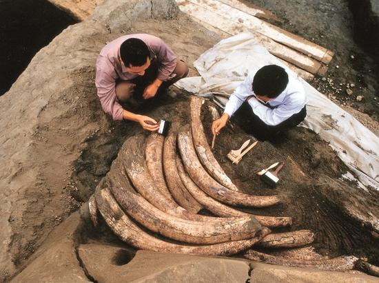 """金沙遗址同时入选""""百年百大考古发现""""和考古遗址保护展示优"""