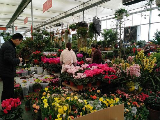市民选购盆栽花。