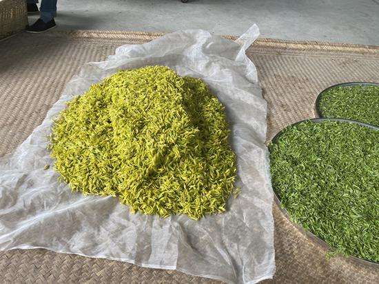 准备进行加工的鲜叶 供图 芦山县委宣传部