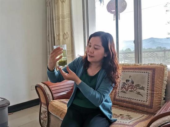 文昌慧正在查看茶叶色泽