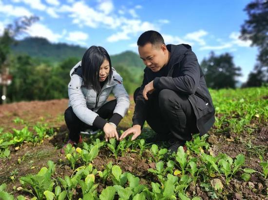 王才斌(右)正在查看芥菜苗长势