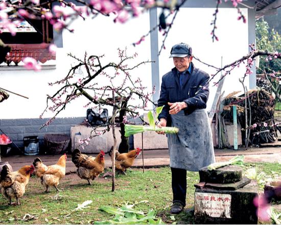 农家小院满眼春摄影/彭长生