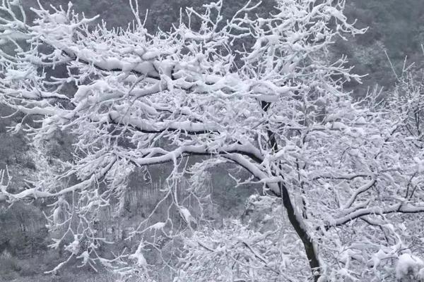 下雪啦!都江堰市青城后山景区迎来今冬第一场雪