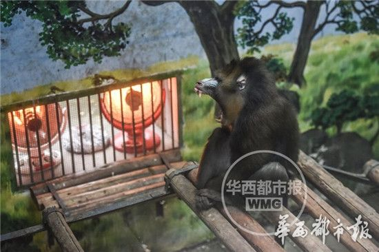 成都动物园企鹅烤火过冬 天冷了饲养员们操碎了心