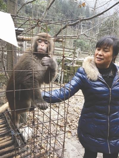 """马大姐给猴子""""山娃""""喂食"""