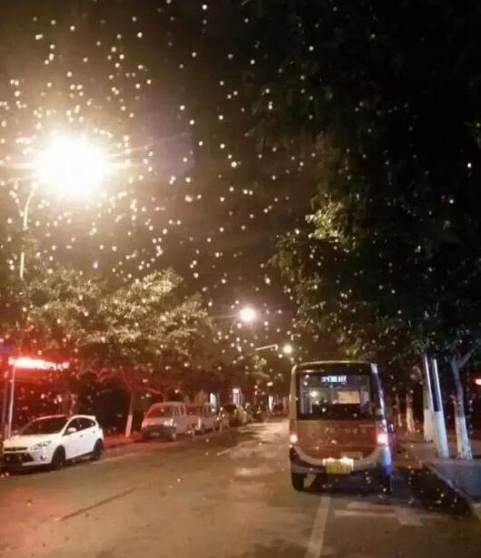 攀枝花城区再现雪影