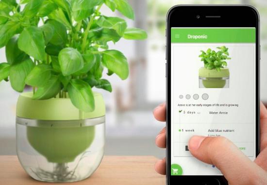 智能花盆   该配套手机客户端可帮用户学习营养