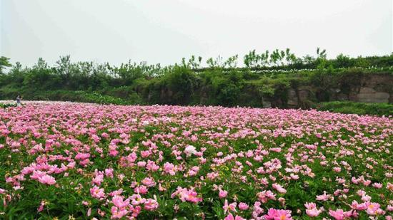 中江芍药谷风景区