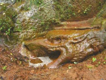 石龙头部(资料图片)