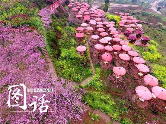 降雨冲淡龙泉山桃花生意 每天损失两三万