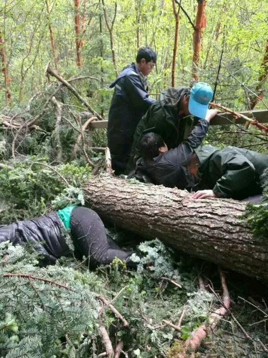 九寨沟景区风吹倒大树 2名游客被砸中身亡
