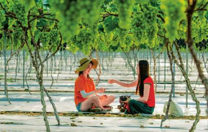 彭山观音镇葡萄产业园。