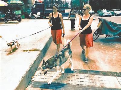工作室合伙人Dani(右)和Marie(左)一起遛狗