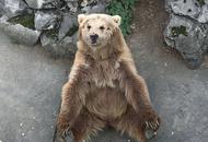 蓉动物园动物晒太阳 棕熊抠脚呆萌