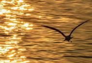 金色夕阳下的西昌邛海