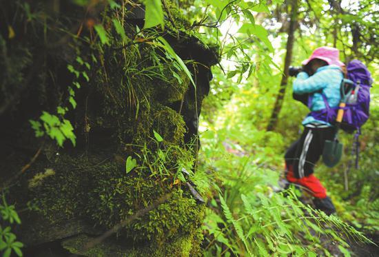 6月5日,茂县土门镇,考古工作者在山间古道进行考察,发现一处人工修筑的痕迹。