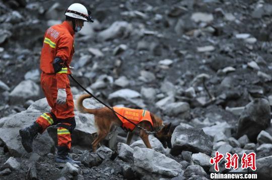 搜救犬在救援现场。 刘忠俊 摄