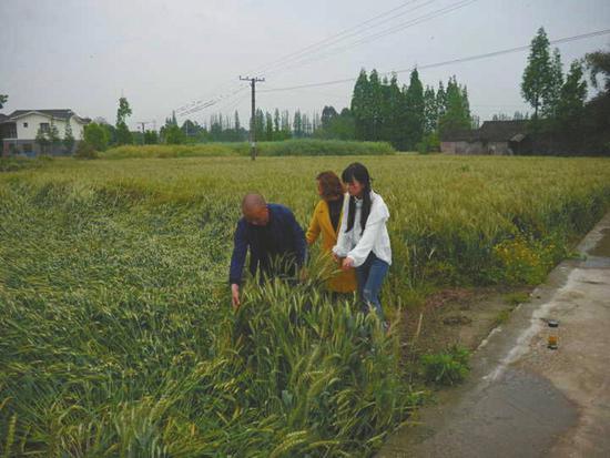 王伶俐与王志全来到所管理的田地查看作物生长。受访者供图