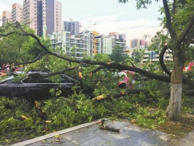 大风刮倒行道树。