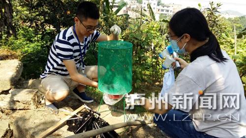 泸州市疾控中心的专家监测蚊虫密度