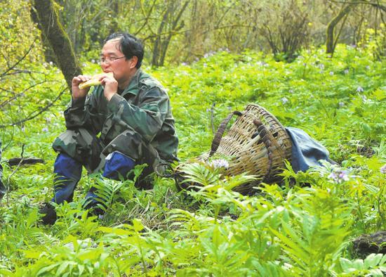 胡进耀在乌鲁木齐北川县深山中找到北川驴蹄草。