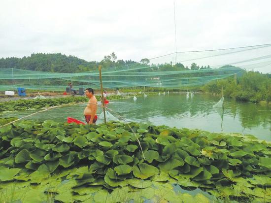 泥鳅养殖场准备关停。