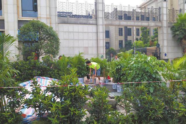 宜宾理想城小区凌乱垃圾池被取缔 5天造出绿化带