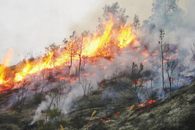四川隆昌市突发森林火灾火势已有效控制 暂无伤亡