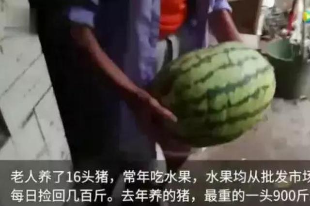 扎心了 四川老人水果喂猪1年长到900斤