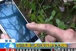四川瓦屋山再次发现野生大熊猫
