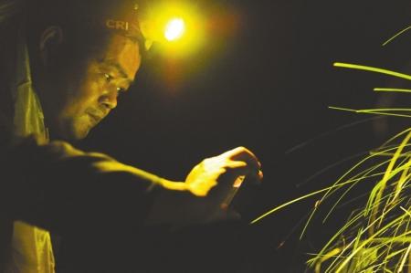 高叔先正在拍摄萤火虫。