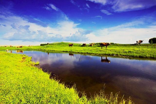 西藏专业力量为野生动物筑起草原保护网