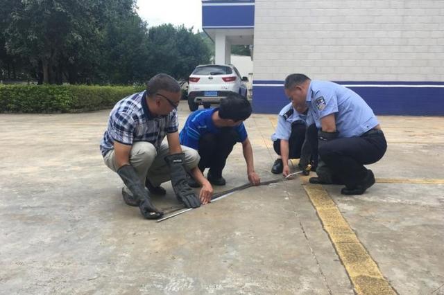 体校训练房现1.4米长野蛇 老师徒手抓获放生
