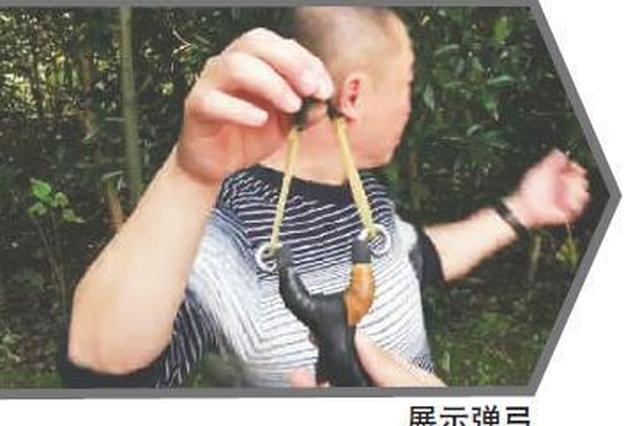 成都男子为儿子买玩具迷上玩弹弓 打苍蝇一击毙命