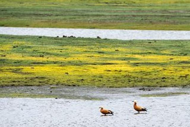 开展保护修复六大行动 四川湿地面积只增不减