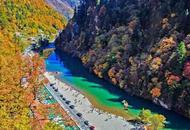 川西最美季节的彩林宛如仙境