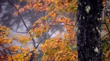 雅安层林尽染万山红遍 美如调色板