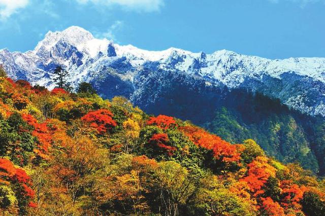 红叶季进入最佳时段 四川赏红锦囊在此