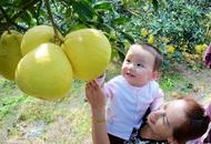 泸州万亩柚子庆丰收
