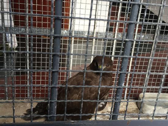 雅安村民发现受伤动物 原是国家二级保护动物