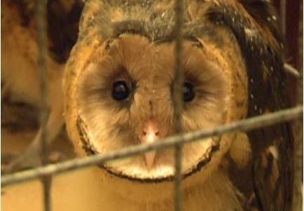 成都酒店发现国家保护动物 农林局将送至专业机构照料